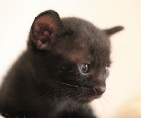 khao manee kitten barcelona - Panigale 05